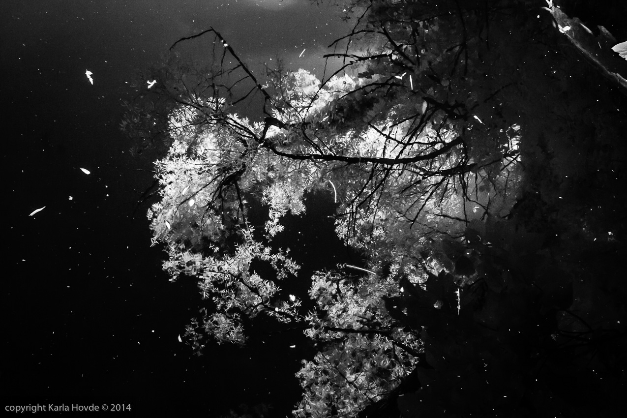 Infrared Landscape: Tree Reflection in Pond looks like a Galaxy © Karla Hovde 2014
